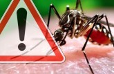 دراسة حديثة: تحفيز تكاثر البعوض للقضاء على فيروس زيكا