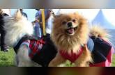 مهرجان أبوظبي للحيوانات الأليفة 2018 يعود من جديد