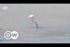 Spain: Flamingos vs tourists on Ibiza | DW English