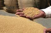 مصر تشتري 190 ألف طن من القمح المحلي