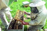 258 مليون ريال واردات السعودية من العسل في عام