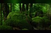 الطحالب تنقي المياه من الزرنيخ بصورةٍ طبيعية