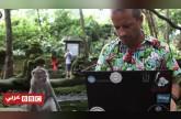 لماذا يفضل الشباب العمل في جزيرة بالي بإندونيسيا؟