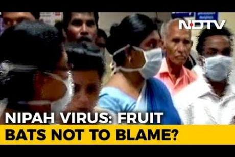 Nipah Virus That Killed 12 In Kerala May Not Be Linked To Bats