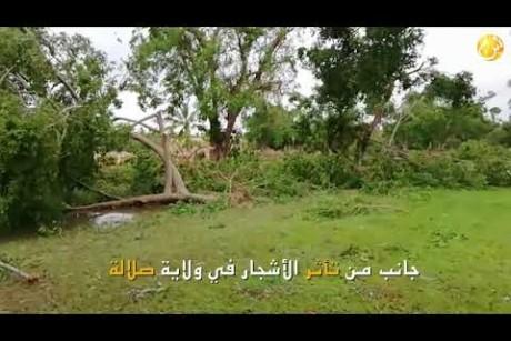 جانب من تأثر الأشجار في ولاية صلالة