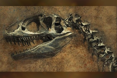Study reveals dinosaur killing asteroid wiped out first tree-dwelling birds too