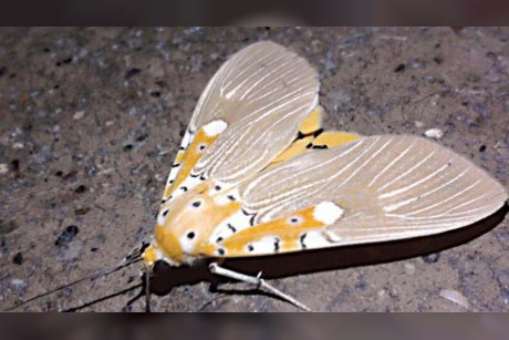 Tracking the humble cousins of butterflies