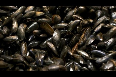 Mussels test positive for opioids