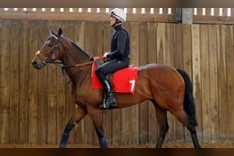 Talking Horses: Battaash can burn off rivals in Temple Stakes