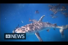 Caught on camera: Biologist almost loses arm to two-metre shark