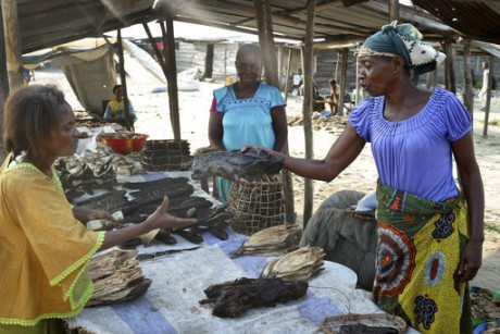 Congos Ebola outbreak poses challenges for bush meat