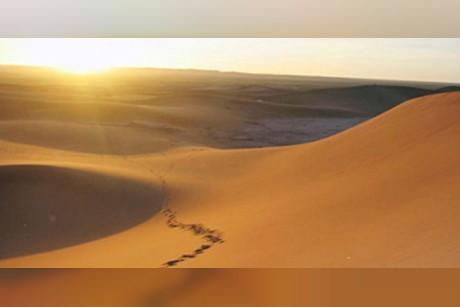 آسيوي يسرق 10 محال ويخفي الحصيلة في الصحراء