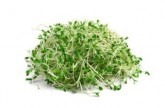 Salmonella warning after seven hospital cases linked to alfalfa sprouts