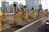 بلدية الشارقة تزرع 3 آلاف زهرة في شارع الاتحاد باستخدام التقنيات الحديثة