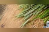 فوائد الشعير للبشرة
