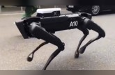 الروبوت الكلب يستعرض قدراته الفريدة!