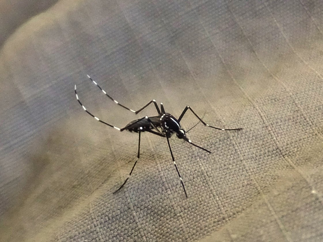 New insights on mosquitoes that spread disease - Dotemirates