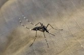 New insights on mosquitoes that spread disease