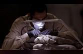 اكتشاف عظام حيوانات عمرها نصف مليون عام بالقرم