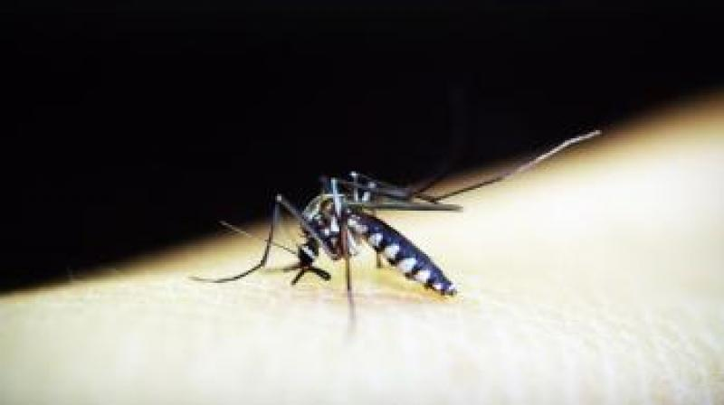 Dengue care still a costly affair - Dotemirates