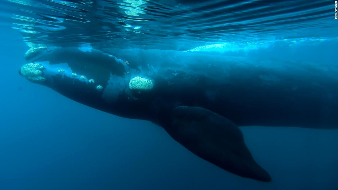 Pro-whaling nations block South Atlantic whale sanctuary - Dotemirates