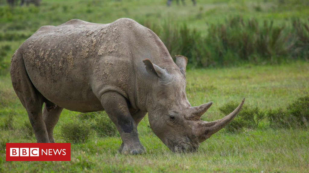 China postpones lifting ban on rhino and tiger parts after outcry - Dotemirates